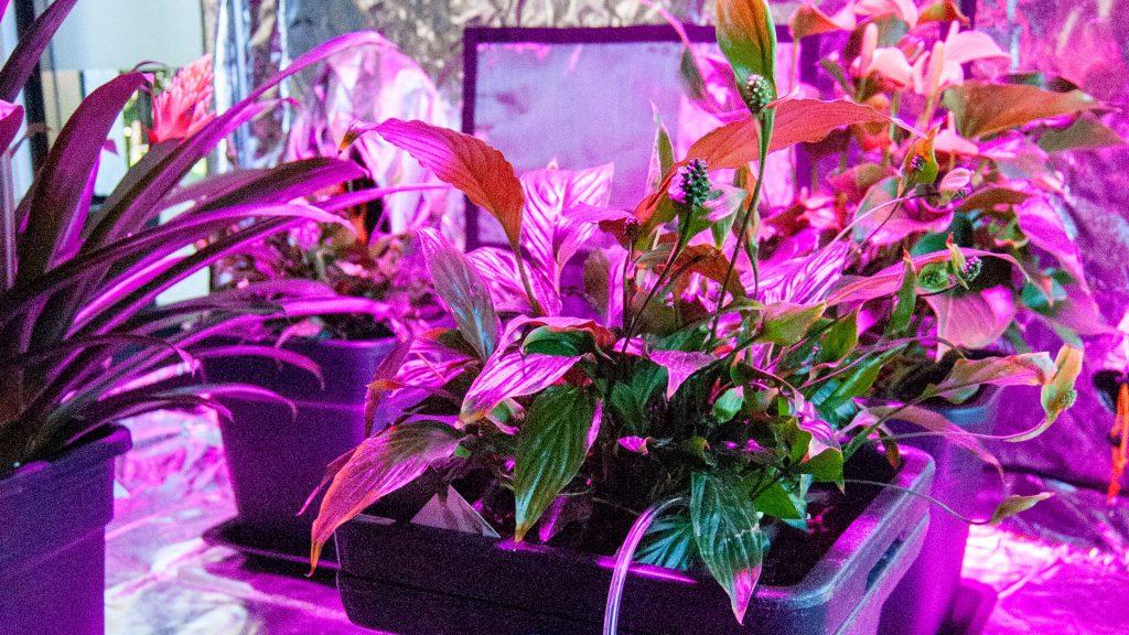 Fioritura indoor: 6 consigli per aumentare la resa green flower