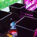 Idroponica - attrezzatura coltivazione indoor