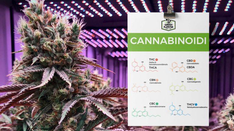 Principi della cannabis - cannabinoidi